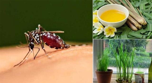 Mẹo đuổi muỗi, ruồi, gián, kiến và một số loại côn trùng
